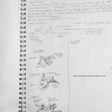 Example of anatomical studies (Pencil on paper, 2004)